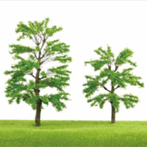 TL14 Pinus wallichiana