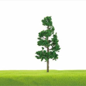 TL16 Populus lasiocarpa Oliv.
